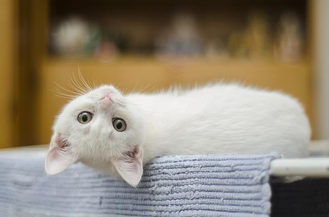 Jak správně pečovat o kočku