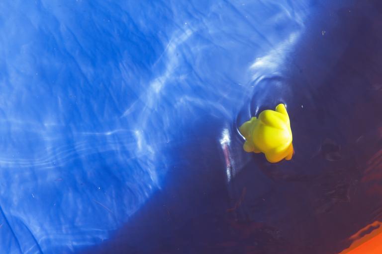 kachnička ve vodě